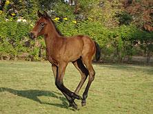 foals_img1