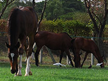foals_img2