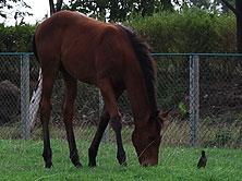 foals_img3