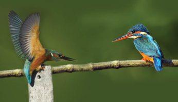 birds24