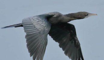 birds26