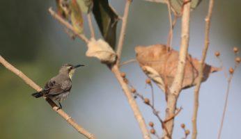 birds37-banner