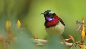 birds42-b
