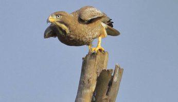 birds53