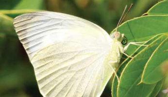 butterfly3_1