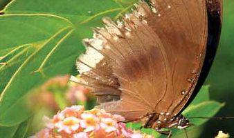 butterfly3_2